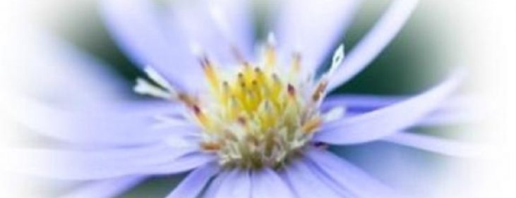image of open flower